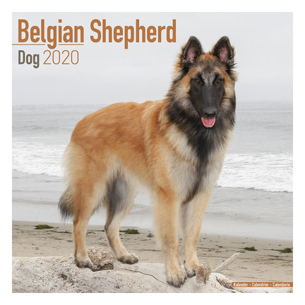 Belgische Herder Kalenders 2020