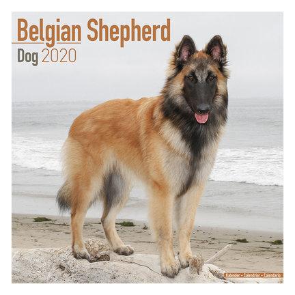Belgische Herder Kalenders 2021