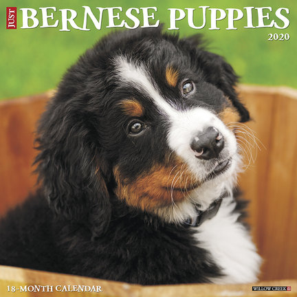 Bernese Mountain Dog Calendars 2021