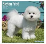 Bichon Frize Calendars