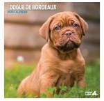 Bordeaux Dog Calendriers