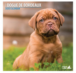 Bordeaux Dog-Kalender