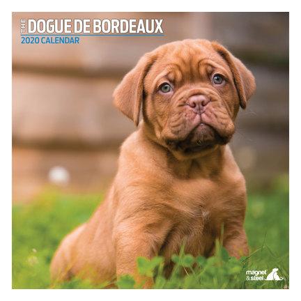 Bordeaux Dog-Kalender