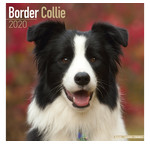 Border-Collie-Kalender