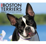 Boston Terrier-Kalender