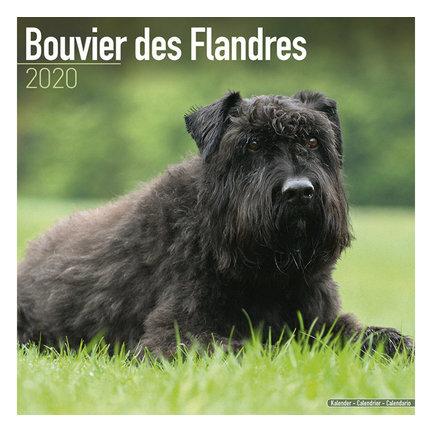 Bouvier Kalender