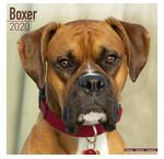 Boxer Kalenders
