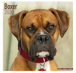 Calendriers Boxer