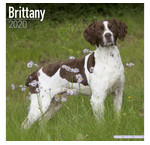 Brittany Spaniel Kalenders