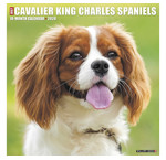 Cavalier King Charles Spaniel Calendriers