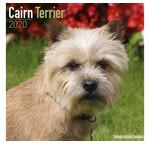 Cairn Terrier Calendars