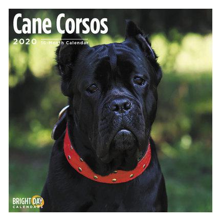 Cane Corso Kalenders