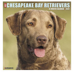 Chesapeake Bay Retriever-Kalender