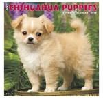 Chihuahua Calendars