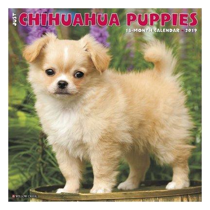 Chihuahua Calendriers
