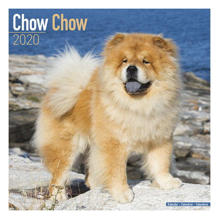 Calendriers Chow Chow