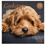 Cockapoo Calendars