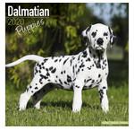 Dalmatian Calendars