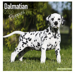 Dalmatier Kalenders