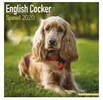Cocker Spaniel Calendriers