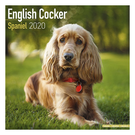 English Cocker Spaniel Calendars