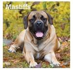 Engelse Mastiff Kalenders