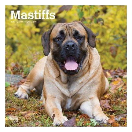 Englisch Mastiff-Kalender