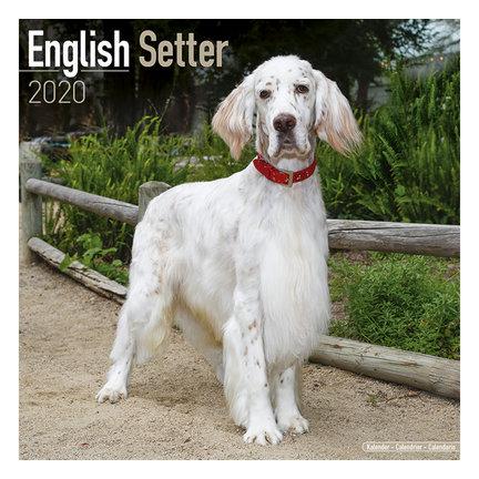 English Setter Calendars