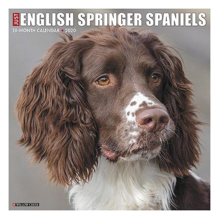 Englisch Springer Spaniel Kalender