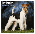 Fox Terrier Calendars