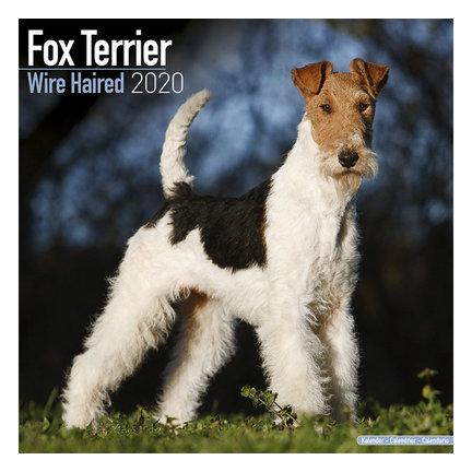 Fox Terrier Kalenders