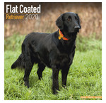 Calendriers Flat Coated Retriever