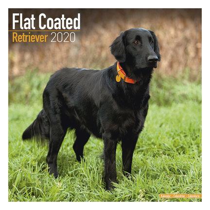 Flat Coated Retriever Kalender