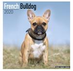 Franse Bulldog Kalenders