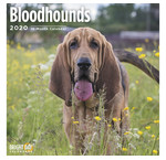 Bloodhound Calendriers