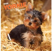 Browntrout Yorkshire Terrier Puppies Calendar 2020