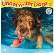 Browntrout Underwater Dogs Calendar 2020