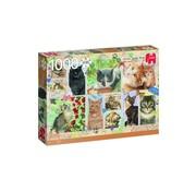 Jumbo Puzzle Franciens Cats 1000 Pieces