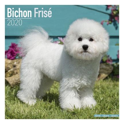Bichon Frise Kalenders 2021