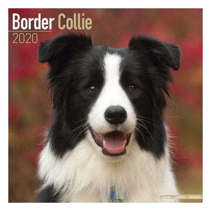 Border Collie Kalenders 2020
