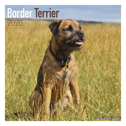 Border Terrier Kalenders 2020