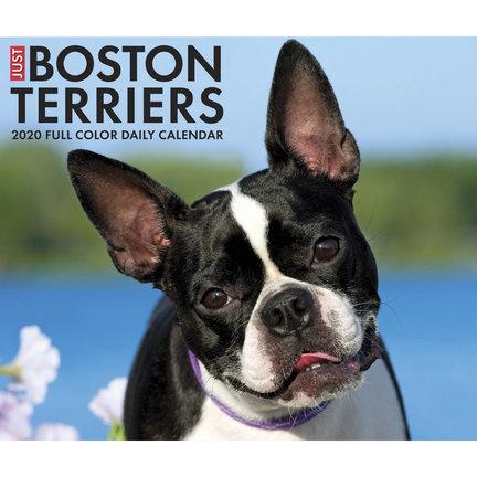 Boston Terrier Kalenders 2021