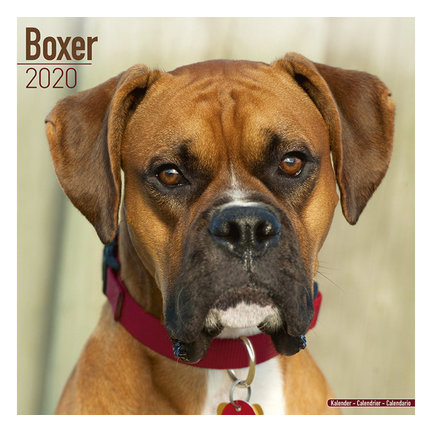 Boxer Calendars 2021