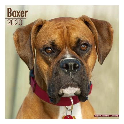 Boxer Kalenders 2021