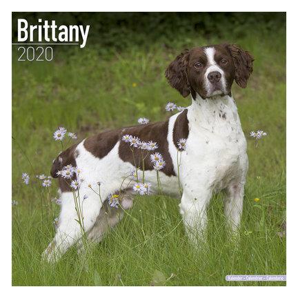 Brittany Spaniel Kalenders 2021