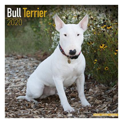 Bull Terrier Kalenders 2020