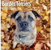 BrightDay Border Terrier Calendrier 2021