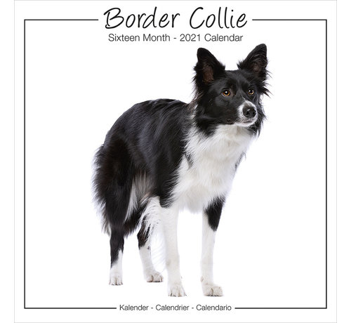 Avonside Border Collie Calendar studio 2021 Range