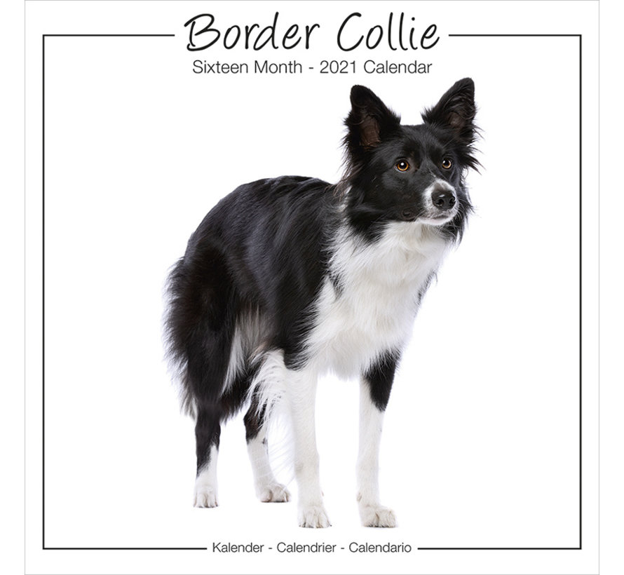 Border Collie Calendar studio 2021 Range