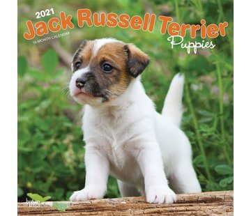 Browntrout Chiots Jack Russell Terrier Calendrier 2021